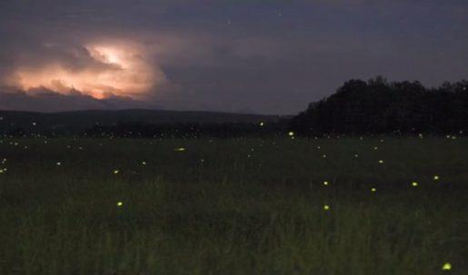 lightning-bugs-fireflies-timelapse-michael-roman